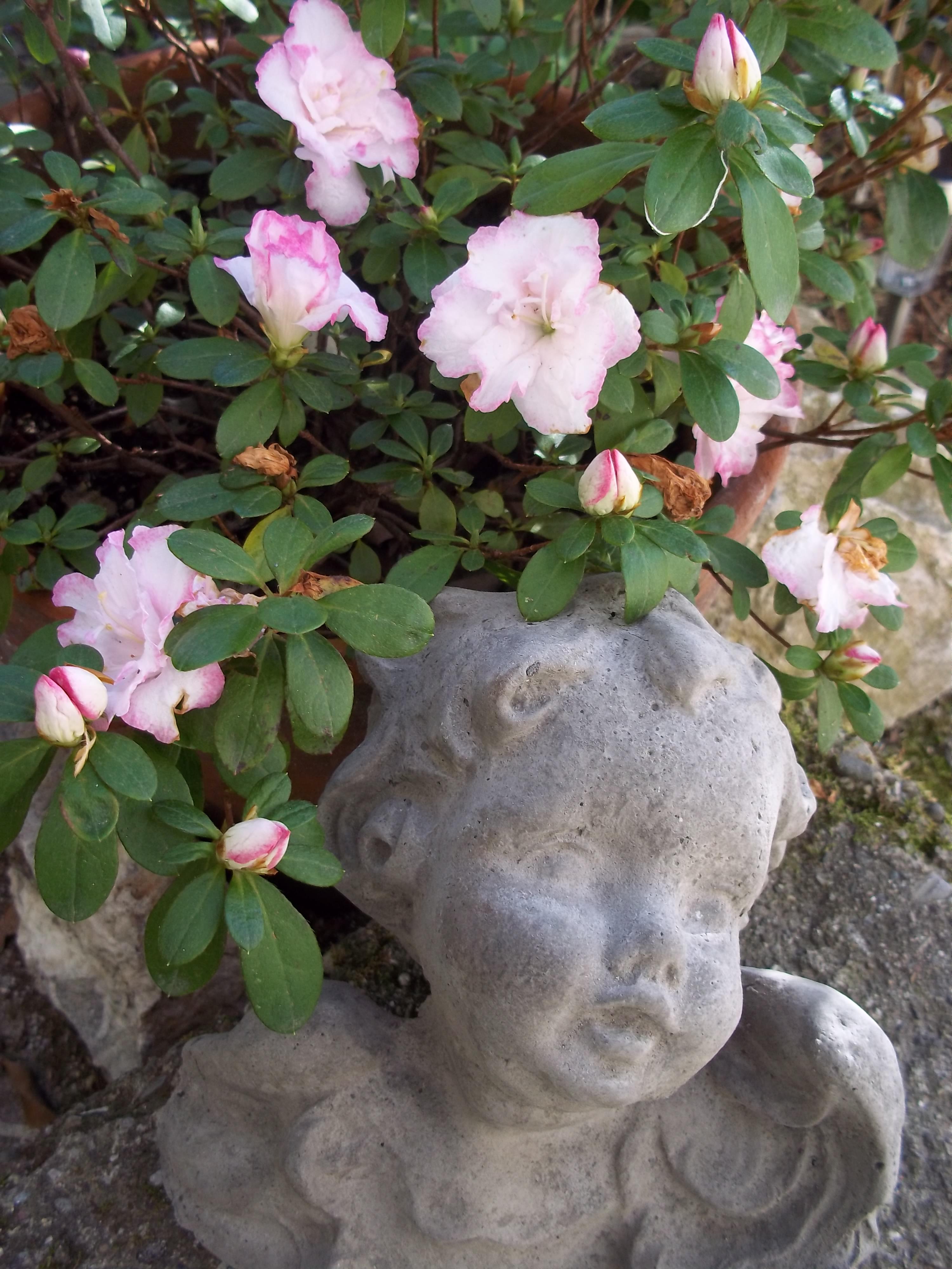 Complementi d arredo da giardino in cemento ipizzidifrancesca for Complementi da giardino